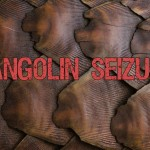 India: Security Forces Seize Pangolin Scales
