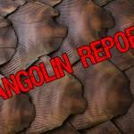 Cambodia's Last Pangolins