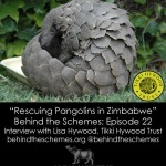 Podcast: Rescuing Pangolins in Zimbabwe