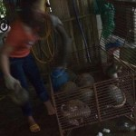 Vietnam: Investigative Reporters Expose 'Godmothers' of Illegal Pangolin Trade