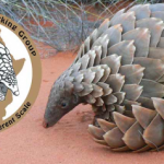 Official Launch of African Pangolin Working Group