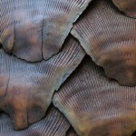 India: Pangolin Scales Confiscated