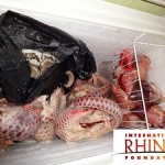 Indonesia: Pangolin Traffickers Busted by Rhino Protection Unit